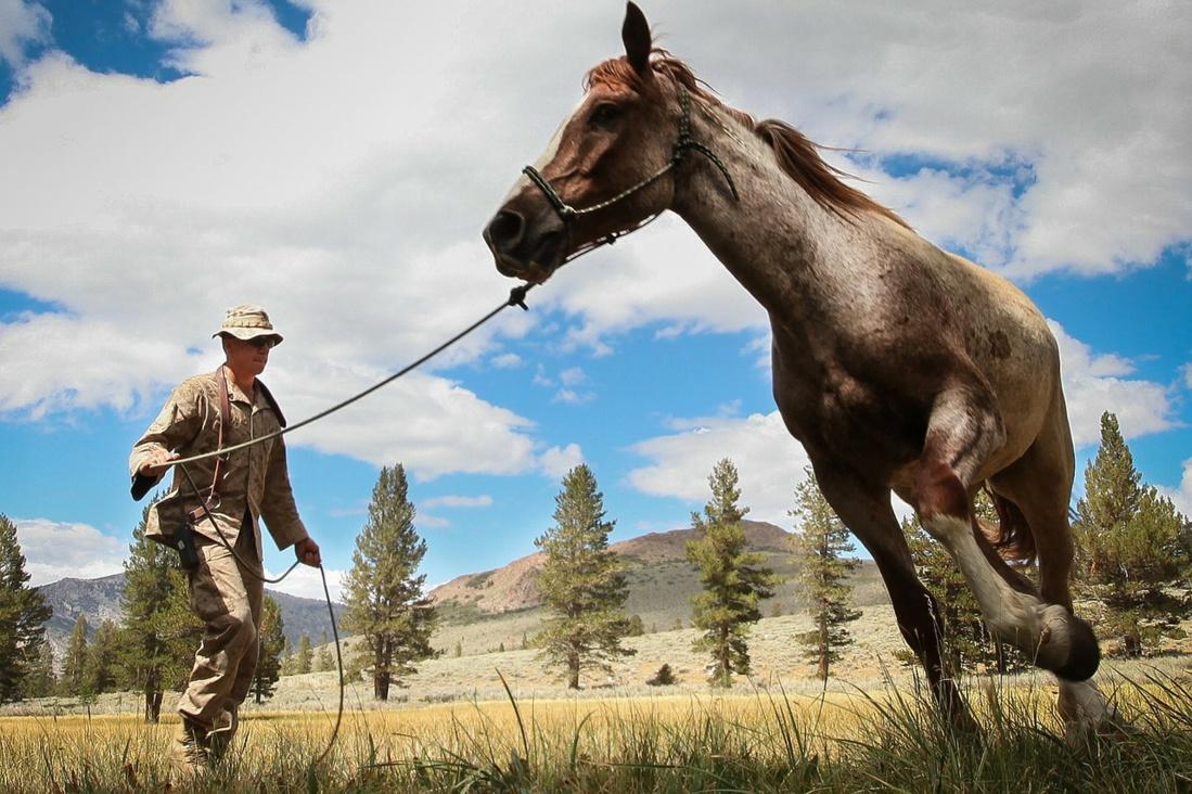 Votre cheval entre bonnes mains