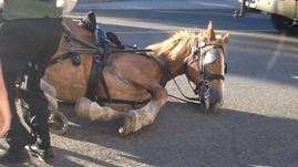 Controverse autour des chevaux attelés à Québec
