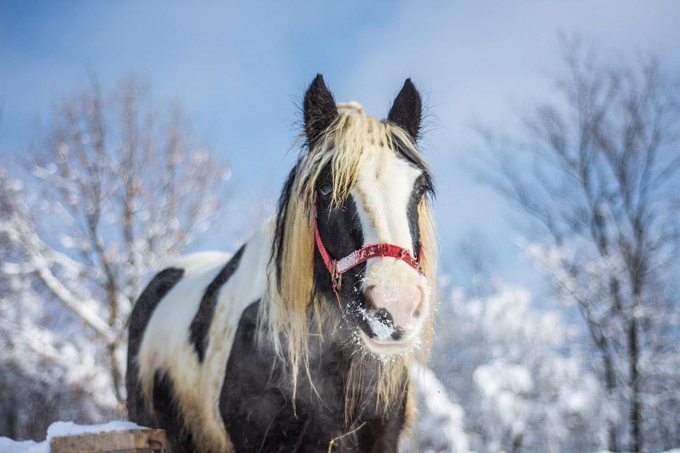 Préparez vos chevaux pour l'hiver