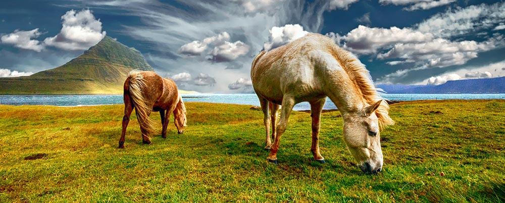 Il n'y a plus de chevaux sauvages sur terre